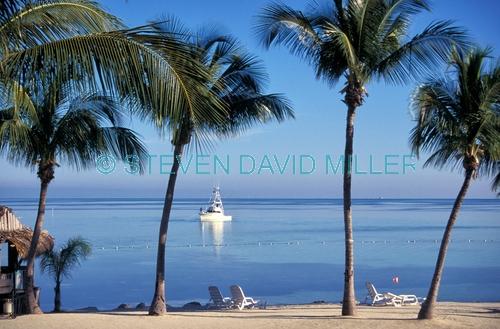 chesapeake resort;chesapeake resort beach;islamorada;islamorada beach;florida keys;middle keys;upper keys;florida keys beach;florida palm trees;florida scene