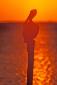 key-largo;key-largo-sunset;florida-bay;florida-bay-sunset;upper-florida-keys;florida-keys;brown-peli