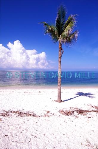 lover's key state park;lovers key state park;lover's key;lovers key;florida state park;barrier island;florida barrier island;gulf of mexico barrier island;southwest florida beach;florida beach;palm tree on beach