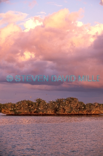 rookery bay;mangrove estuary;naples;southwest florida;ten thousand islands;bird rookery;bird roosting island