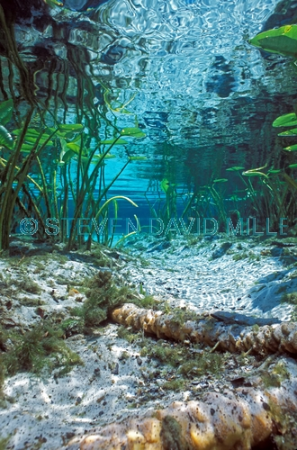 alexander springs;ocala national forest;florida springs;central florida springs;freshwater spring;florida freshwater spring