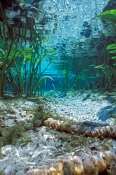 alexander-springs;ocala-national-forest;florida-springs;central-florida-springs;freshwater-spring;fl