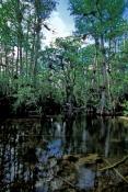 big-cypress;big-cypress-preserve;big-cypress-national-preserve;big-cypress-basin;tamiami-trail;tamia