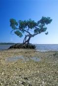 ten-thousand-islands;ten-thousand-islands-national-wildlife-refuge;everglades-national-park;the-ever