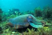 Marine Mollusks