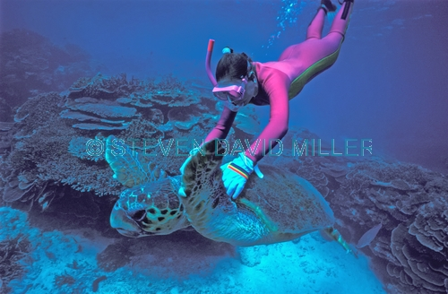 sea turtle picture;sea turtle swimming;turtle with diver;diver;snorkeler;snorkeller;lady elliot island;diving on lady elliot island;great barrier reef;loggerhead turtle;caretta caretta