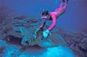 sea-turtle-picture;sea-turtle-swimming;turtle-with-diver;diver;snorkeler;snorkeller;lady-elliot-isla