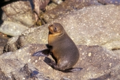 New Zealand Marine Mammals