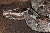 African Reptiles